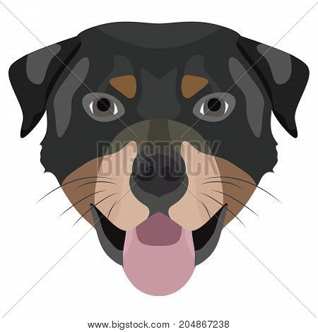 Illustration Dog Rottweiler