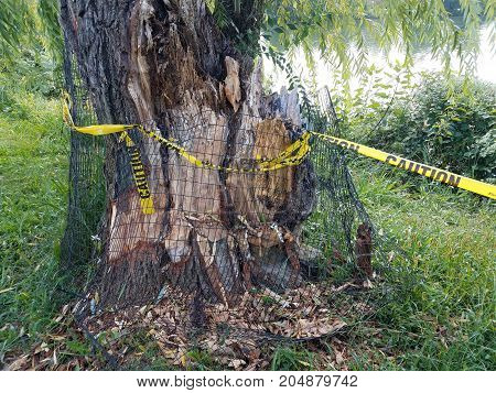 tree with metal cage and yellow caution tape and water
