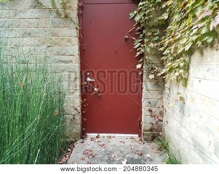 many tall green bamboo grass stalks growing together and red door and building