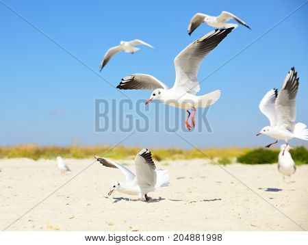 white seagulls on the beach on a summer day
