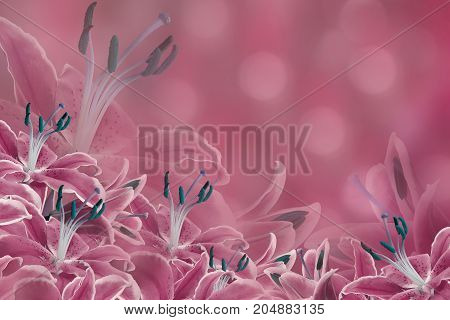 Floral pink background. Lily flowers on a blurred bokeh background. Flower composition. Nature.