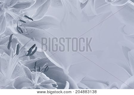 Floral light gray beautiful background. Flower composition of flowers Lilies. Nature.