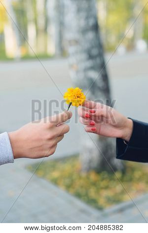 man gives a woman flower of marigolds