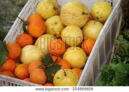 drawer of maracuya, mandarins, oranges and organic lemons