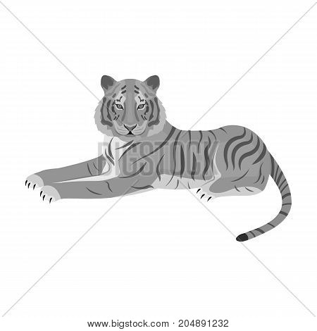 Tiger, a predatory animal. The Belgian tiger, a large wild cat single icon in monochrome style vector symbol stock illustration .