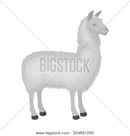 Lama, a South American pack animal. A lame, a cloven-hoofed mammal single icon in monochrome style vector symbol stock illustration .