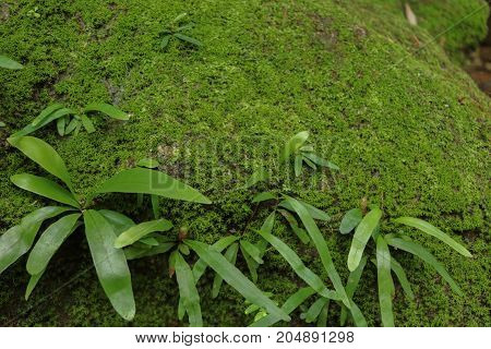 Green moss with subtropical plants and fern in garden background.