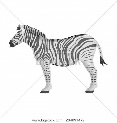 African, desert zebra. Wild cloven-hoofed animal, zebra single icon in monochrome style vector symbol stock illustration .
