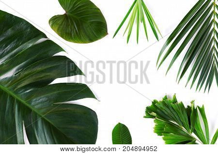 different tropical leaf beautiful green leave set on white background