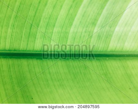 Beautiful leaves are beautiful green, suitable for backgrounds or scenes.