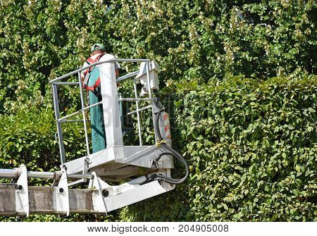 Man mows high bush on a lift