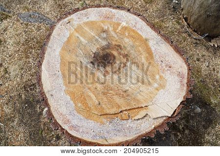 high angle view on stump cross section