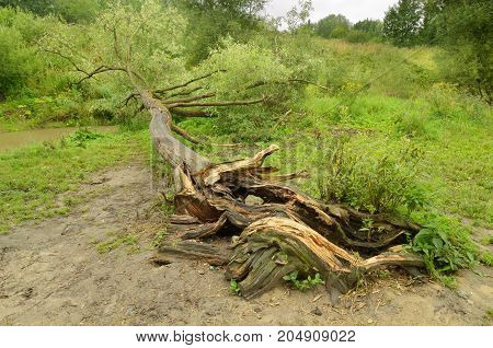 There was a heavy Uragan.Lie fallen trees.