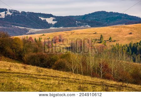 Rolling Hills With Naked Forest In Autumn