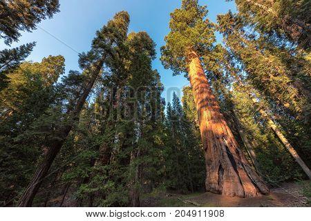Park at autumn. California, United States.