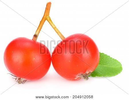 Red Rowan Berries With Green Leaf Isolated On White Background. Macro