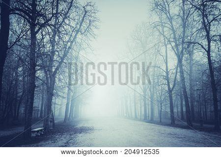 Autumn Misty Park
