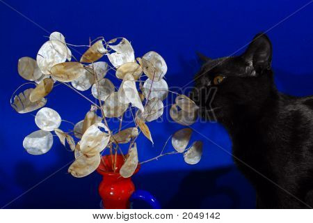 Black cat smelling the leafs of the branch poster