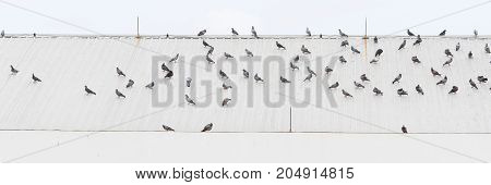 Pigeons on a roof - Stock Image