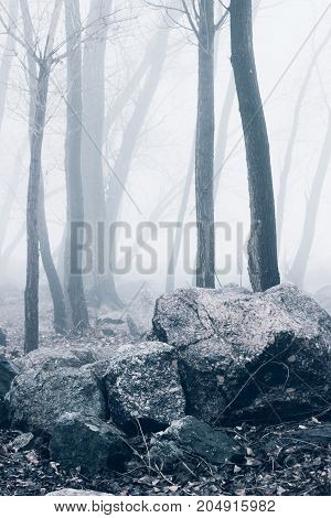 Mist In Silent Forest