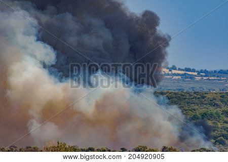 Raging holm oak tree fire across the hill with high black and white smoke