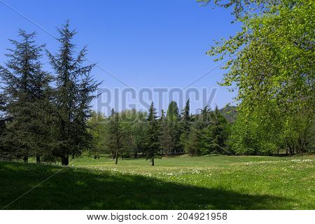Rural landscape composed of flowering trees and meadows in the middle of spring.