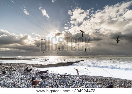 Seascape with sunset and a flock of seagulls