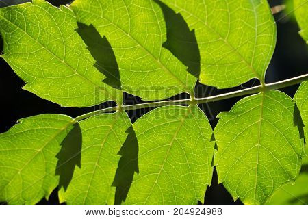 green leaves on a branch to the light of the sun