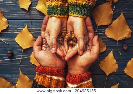Autumn Couple Holding Hands Oak Acorn Top View,fall Ash  Leaf,autumnal Mood,relationship Family Love