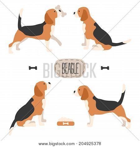 Set of dog beagle on white background. Vector illustration