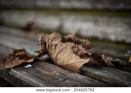 Autumn leaves fall and flutter here and there.