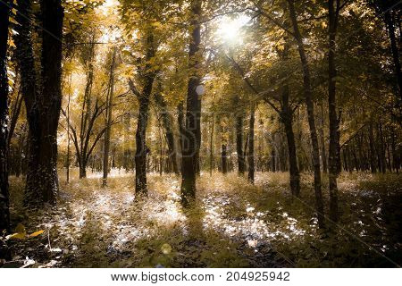 In a corner of the forest the sun passes through the leaves of the branches.