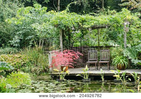 Red Acer in watergarden by chairs with pond in front