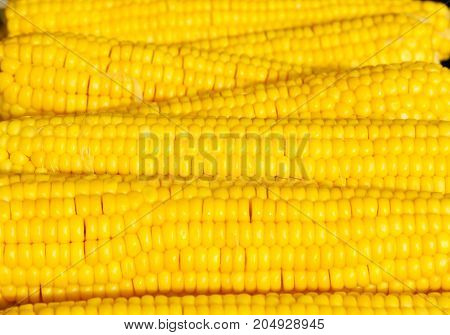 Grilled Ripe And Tasty Corn Cobs For Babrecue