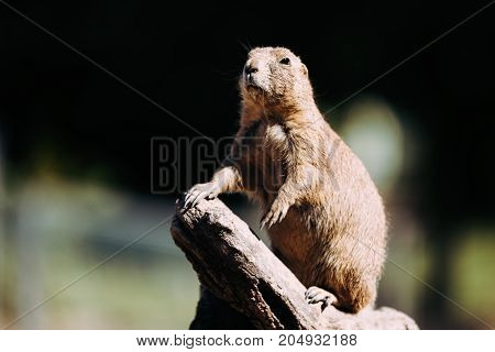 Portrait of little cute marmot standing on tree in nature