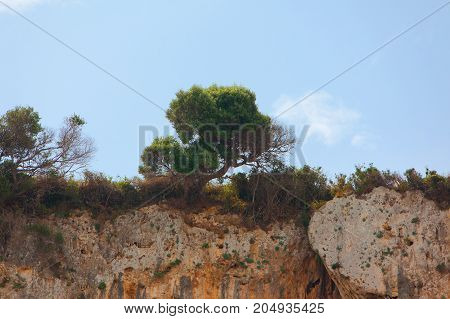 trees standing on the top of a cliff edge. tree growing on rock cliff mountain