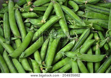 Ripe green peas in the pod embankment garden