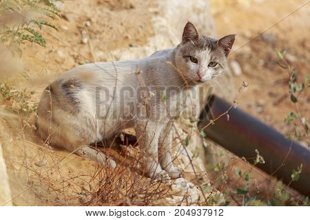 Homeless Cat Look At Photographer
