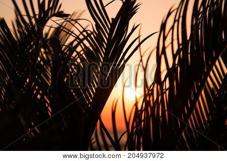 The fiery orange sun breaks through the branches of the palm tree. Tropical scene