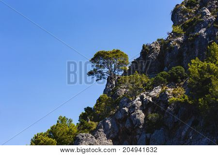a beautiful pine on a cliff at the shores of the Adriatic Sea