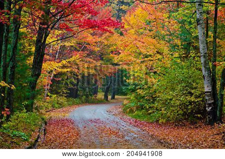 Colorful trees in Killarney Park in fall time Canada
