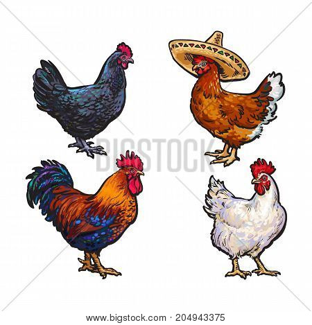 vector cartoon hand drawn sketch chicken set. Brown blue, white colored rooster, cock, dark blue colored, brown chicken in sombrero. Isolated illustration on a white background. Farm poultry chicken