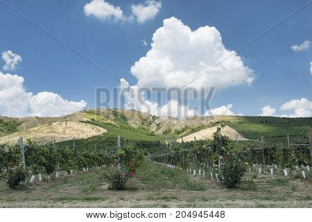 Rural landscape at summer between Modigliana and Faenza (Forli Cesena Romagna Italy)