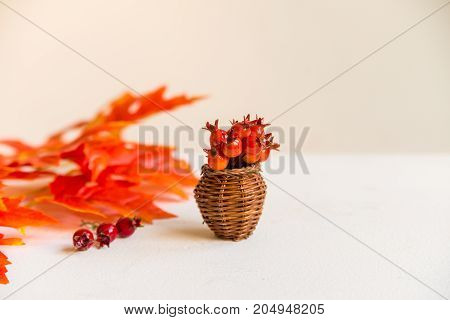 Autumn background with red artificial leaves and hawthorn in small vase on white background