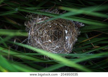 Empty bird's nest hidden in tall grass.
