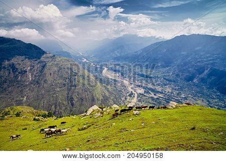Aerial View Of The Kullu Valley With Horses In The Foreground. Naggar, Himachal Pradesh. North India