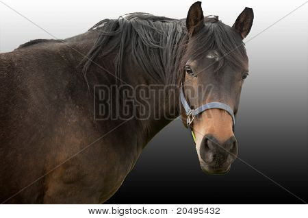 Hest Danmark