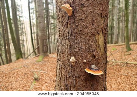 mushrooms on an old tree in the forest