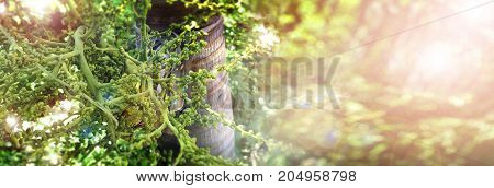 Background tree is Palm fox tail fruit photo close up on tree has copy space and lens flare.