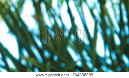 Abstract blur background of Palm fox tail leaf and the sky full frame blue and green bright color.